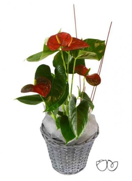 Plantas de interior: tendencias y recomendaciones