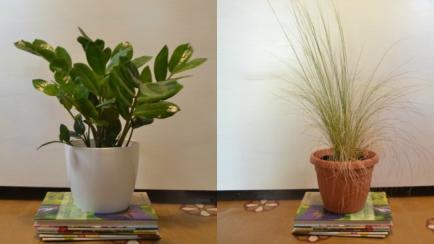 Plantas de verano, cómo generar abono en casa y más secretos de jardinería