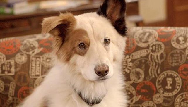 Parece serio, pero hace reír. Stan es un perro con muchas historias para contar en su blog.