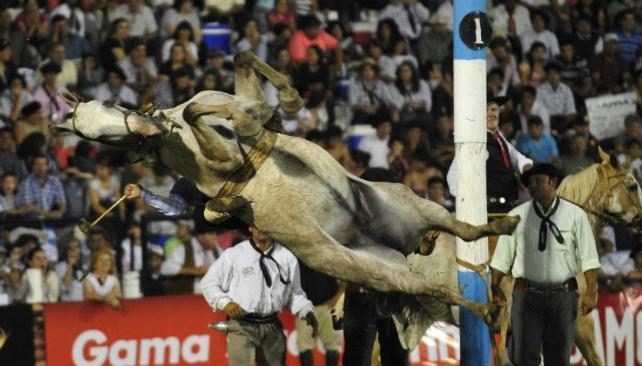 La Roseta, la yegua que murió desnucada el sábado 5 de enero en el festival.