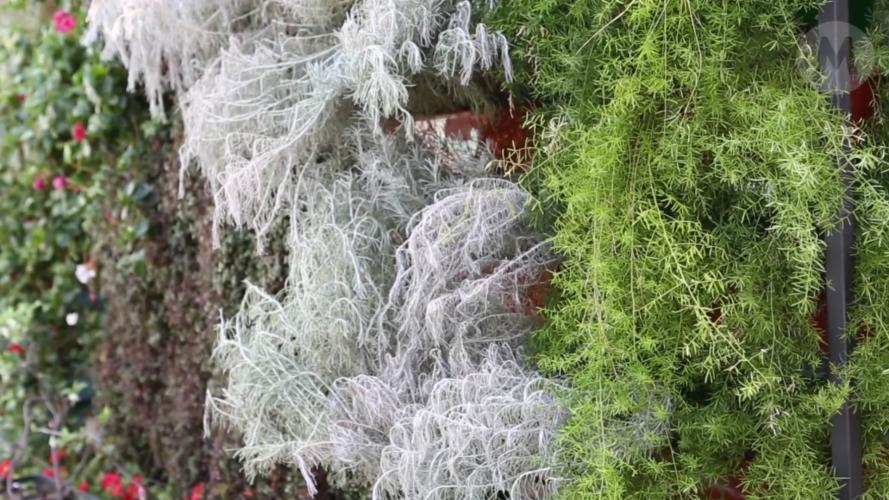 Jardines verticales: las recomendaciones de un paisajista