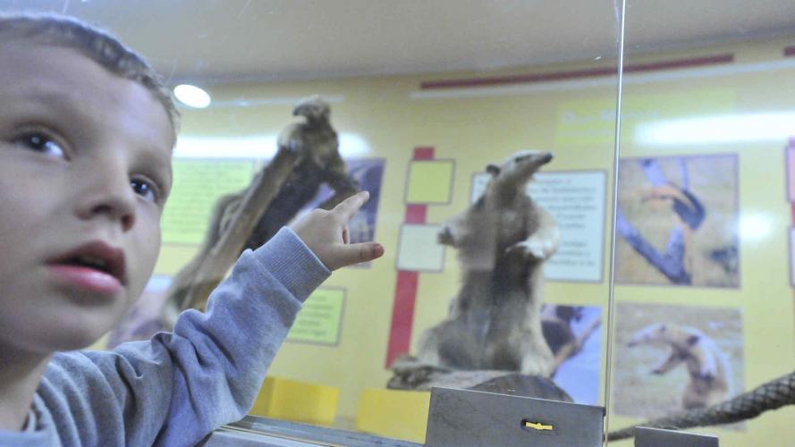 Gratis: una divertida vigilia en los museos