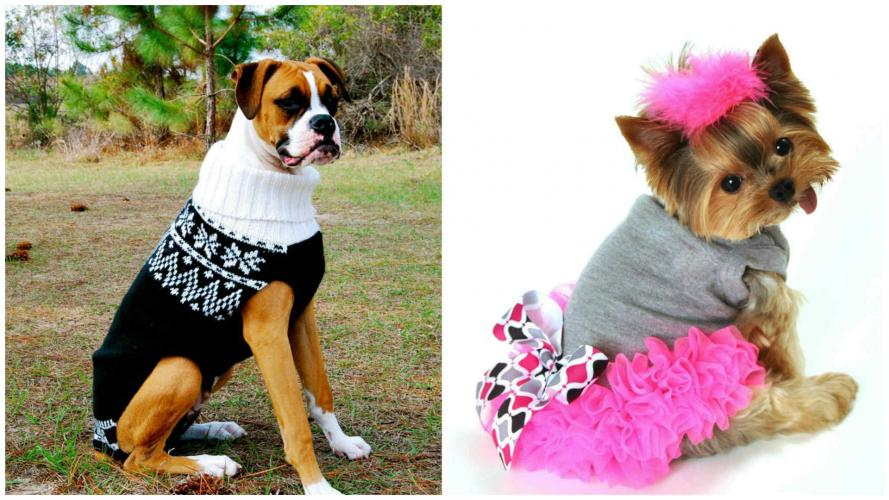 Look animal: prendas para mascotas