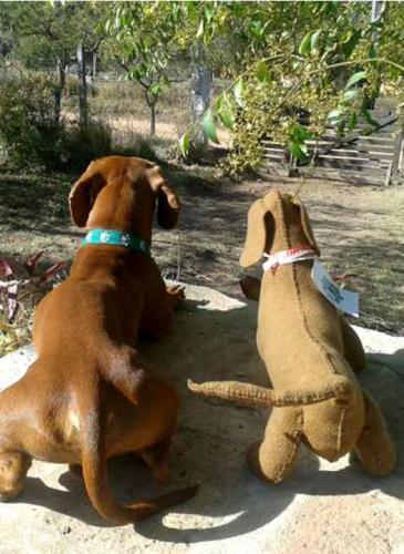 ¡Muy tierno! Recrea mascotas reales en peluches